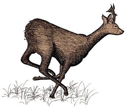 Illustration type 6 ennéagramme